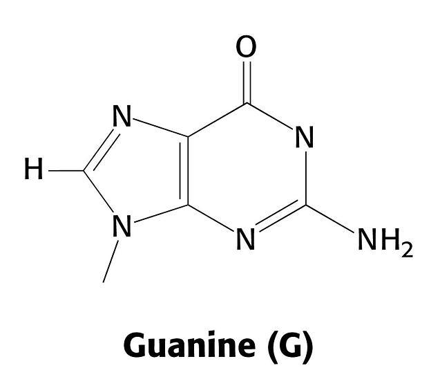 mnemotecnia guanina